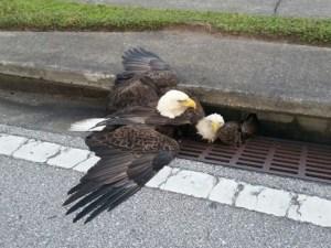 2-eagles